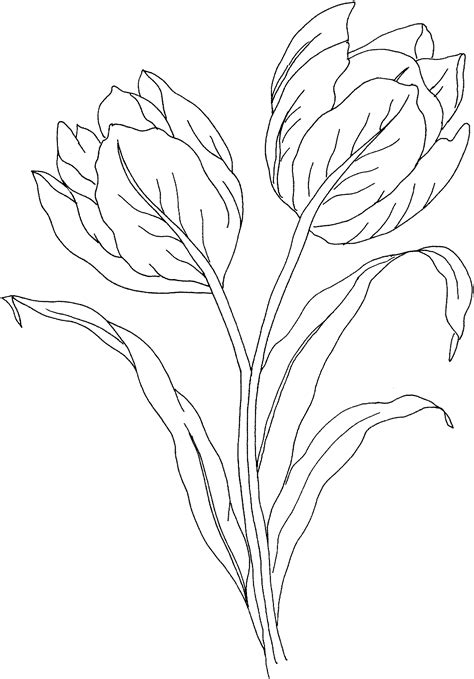coloring page tulip flower free printable tulip coloring pages for kids