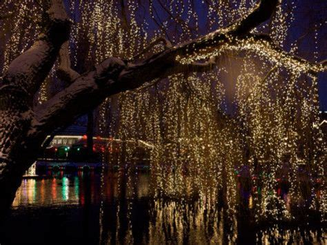 Twinkle Lights Weeping Willow Tree Fairy Lights Pinterest Twinkle Tree Lights