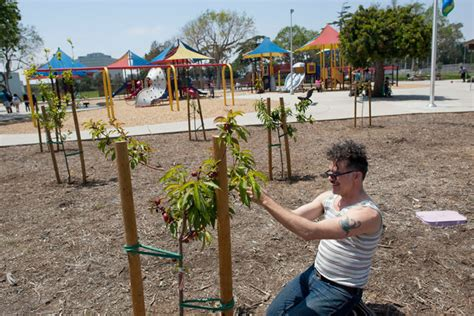 free fruit trees los angeles fruit trees gaining ground in an underground sort