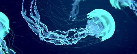 Oxy Jelly Blue Glowing glowing jellyfish blendernation