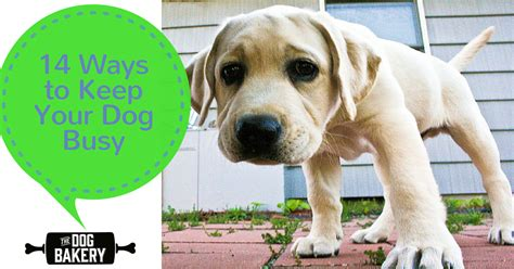 how to keep a puppy busy 14 ways to keep your busy while you re at work the bakery