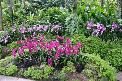 imagenes de jardines con orquideas jardin botanico singapur tillandsias a 233 reas