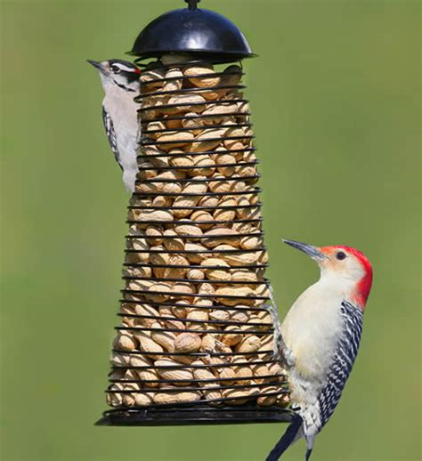 top 28 peanut bird peanut butter for birds with