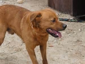 Apartment Dogs Medium To Large Medium Apartment Dogs Nukra