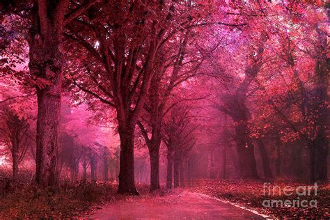 Autumn Pink surreal pink autumn fall woodlands nature