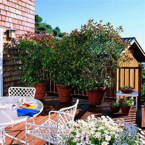 creating privacy in your backyard creating more privacy in your backyard scott darling