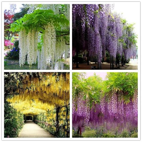Bunga Artificial Broken White best 25 wisteria tree ideas that you will like on