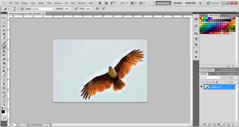 tutorial gambar elang membuat brush sendiri di photoshop rumah desain