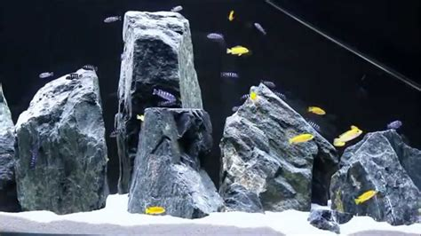 mbuna aquascape mbuna aquascape menhir malawi mbuna aquarium 30 5 2015 1 day after
