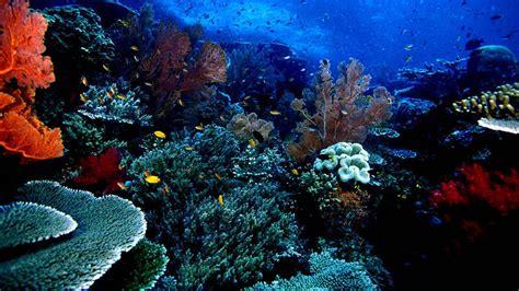 Kipas Dinding Nasional taman nasional bunaken yang indah akan taman laut dan