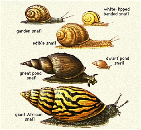 how to find a snail in your backyard romanes 1887