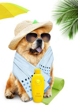 sunblock for dogs sunscreen for dogs