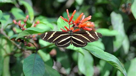 florida native plant society free butterfly plants with native garden tour in palm