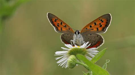 imagenes de mariposas posadas en flores mariposas en flores hd 2048x1152 imagenes wallpapers