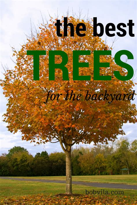 best trees for backyard 10 of the best trees for any backyard small trees yards