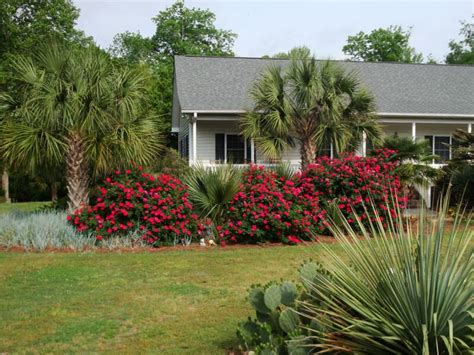 Knockout Roses Landscape Ideas Nc Palms And Knockout Roses