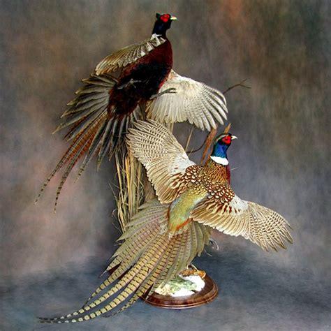 Cool Shed Designs bird mounts birds photo galleries walnut hollow