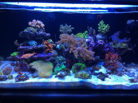 My IM Fusion 20 mixed reef   REEF2REEF Saltwater and Reef