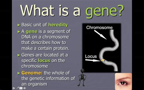 how does dna determine a trait such as eye color genetics the study of heredity what is the relationship