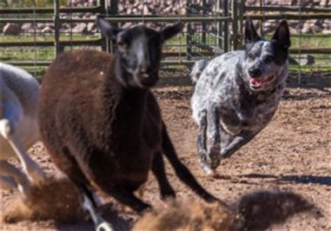 az cattle rescue arizona cattle rescue s
