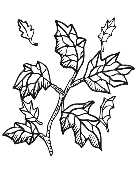 coloring page of a tree branch fall leaf from tree branch clipart panda free clipart
