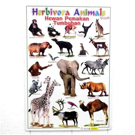 jual poster hewan herbivora  lapak grosir poster murah