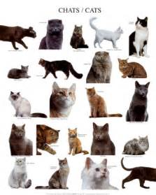different types of cats with pictures