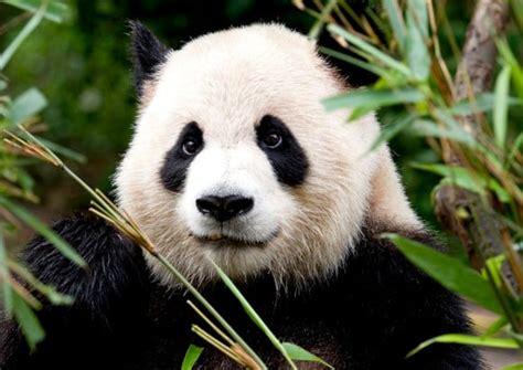 fotos animales lindos los 10 animales mas lindos del mundo ecomirada