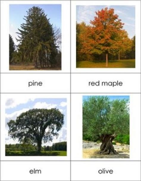 different types of trees 10 interesting trees facts my interesting facts