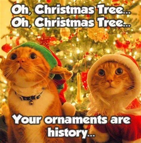 Cute Christmas Meme - 18 funny animal pics for your wednesday animal pictures