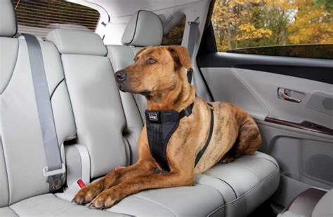 removing dog hair from car upholstery best way to remove dog hair from car methods for clean car