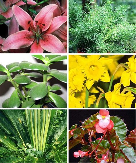 poisonous house plants for dogs common house plants that are toxic to pets aspca apartment therapy