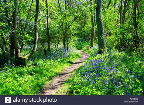 Day 6 A Scenic Detour by Footpath In Beautiful Green Woodland With Flowers