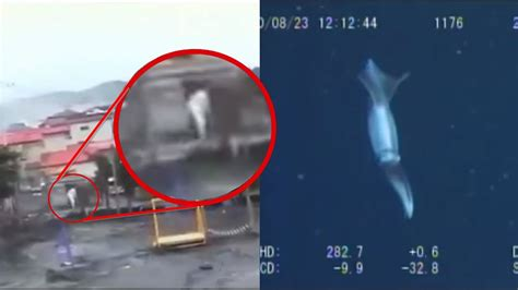 imagenes raras de japon 5 extra 241 as criaturas captadas en video en el tsunami de