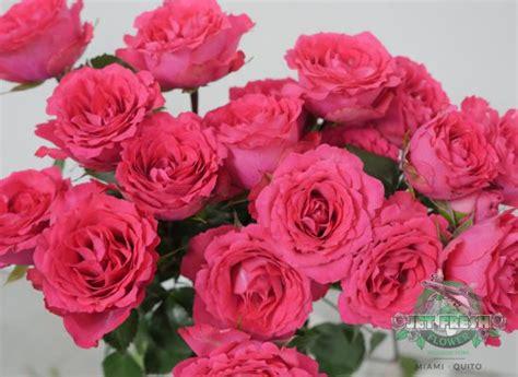 mayras series garden roses  bellalinda spray roses