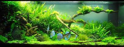 Nature Aquascape by Adrie Baumann Und Das Aquascaping Aqua Rebell