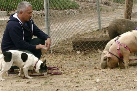 cesar millan puppy biting how to stop puppy biting