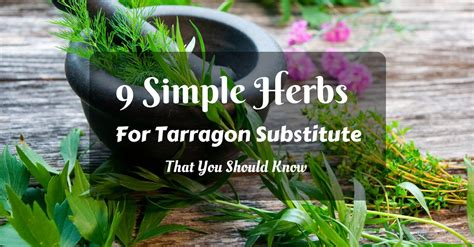 tarragon substitute 9 simple herbs that you should know