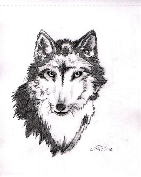 a wolf tattoo sketch by nonparelli on deviantart
