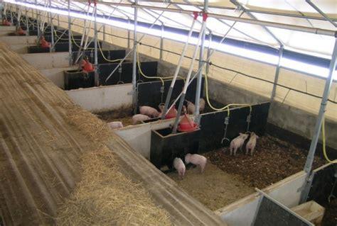 pig housing designs pig rearing polytunnel design manufacturer mc gregor