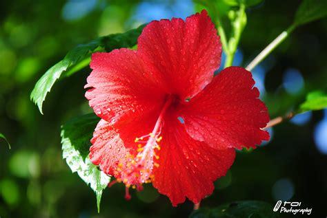 tema tumbuh tumbuhan bunga