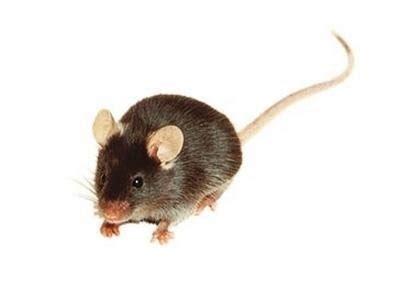 ufficio di collocamento lodi disinfestazione topi e ratti derattizzazione