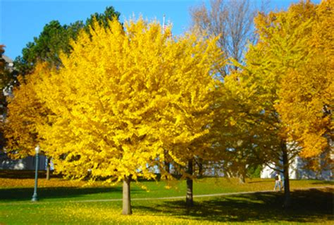 best type of tree for types landscape trees images