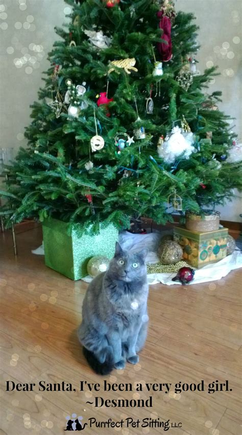 is it safe for your pet to drink the christmas tree water