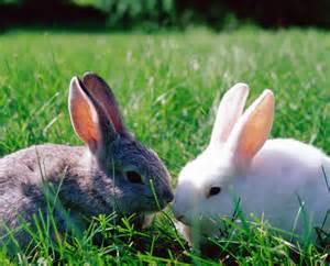sympt 244 mes et causes du stress chez le lapin
