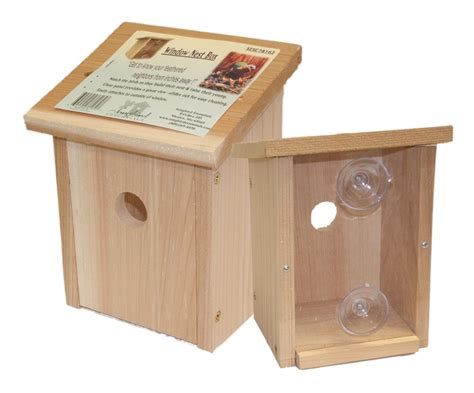 window view bird house watch birds build their nest and