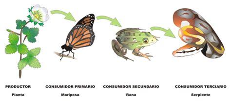 significado de cadenas alimenticias ecolog 237 a ecologia y los seres vivos