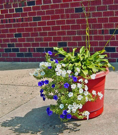 colorful single sidewalk planter s photo album