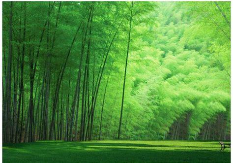macam macam rumput liar hias dilengkapi gambar rumput hd