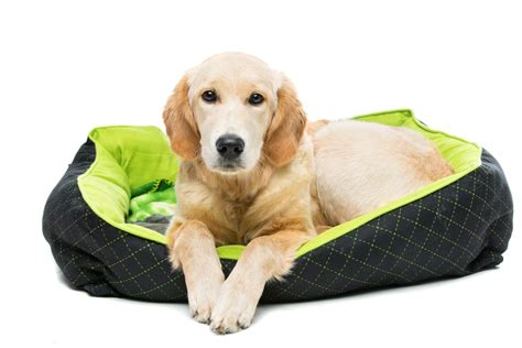 how to wash a dog bed how to wash dog bed 28 images how to clean a large dog